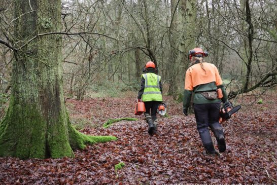 Triton partners with The Heart of England Forest to create lasting legacy